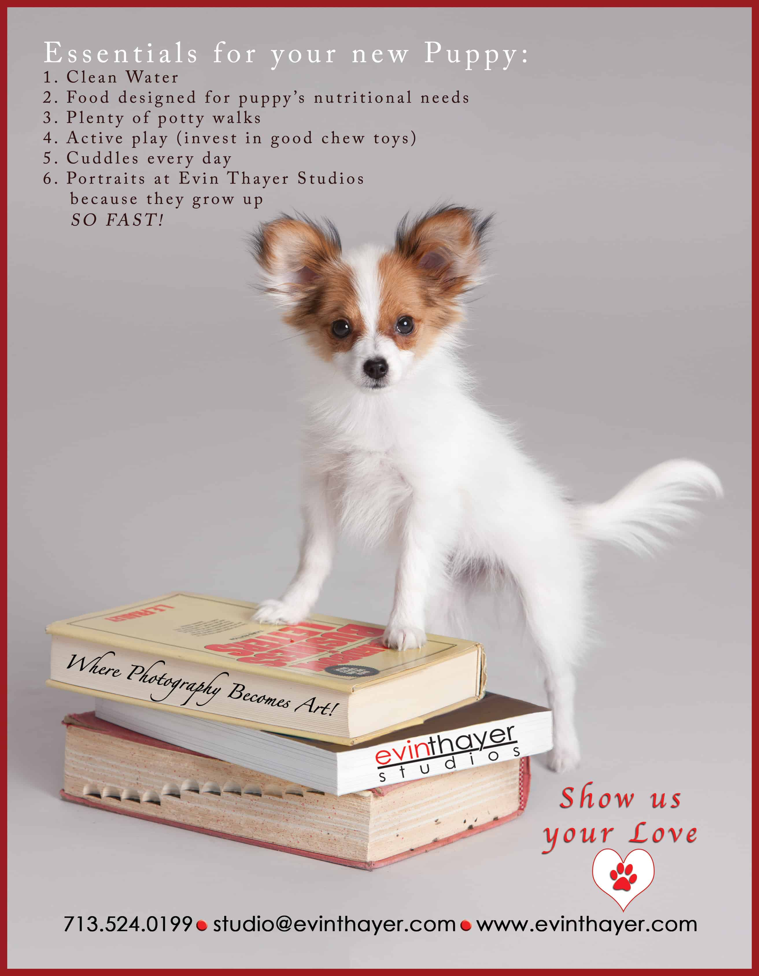 What_Your_New_Puppy_Needs